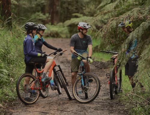 Warburton Mountain Bike Destination Update – June 2021