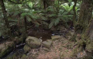 small creek running through fern gully in warburton victoria