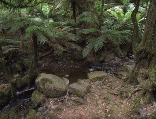 Environmental values at the heart of Warburton mountain bike trails