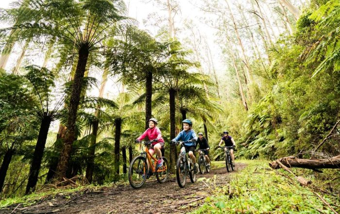 Family mountain biking through forest - Warburton Mountain Bike Destination