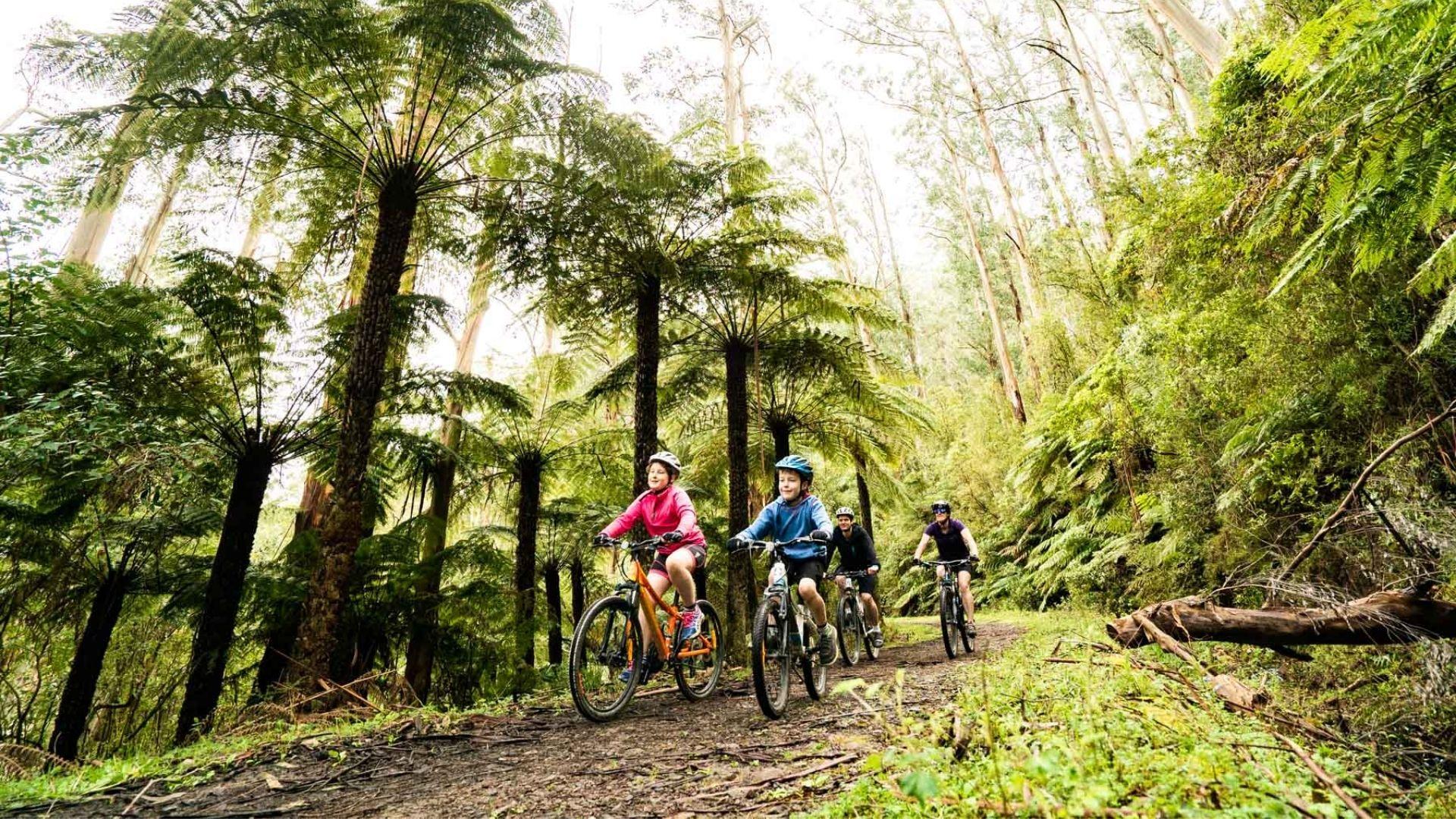 Family mountain biking through forest - Warburton Mountain Bike Destination