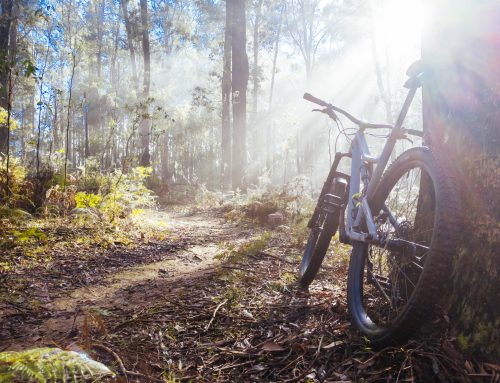 Warburton Mountain Bike Destination Update – September 2021